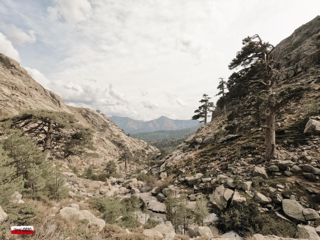 Entre pierres et végétation : Les pins laricio